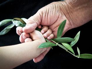 Can EVOO Cure Alzheimer's Disease? Researchers Explore | Bellucci